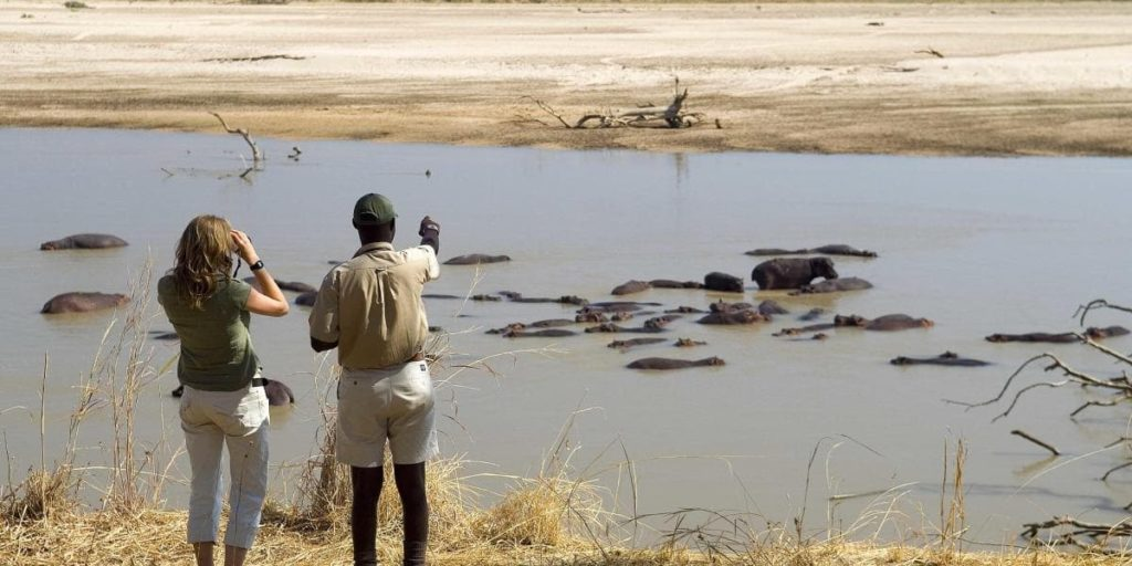 Walking Safari in Zambia, A Pool full of Hippos ( Image: Robin Pope)