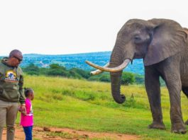 Bupa The Elephant at Ol jogi Wildlife Conservancy