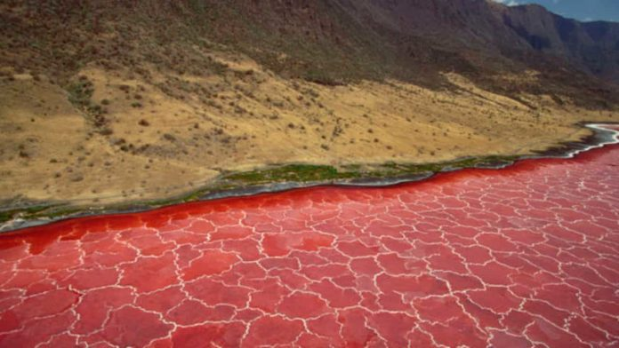 Lake Natron, the Red Lake, Unique attractions in Tanzania