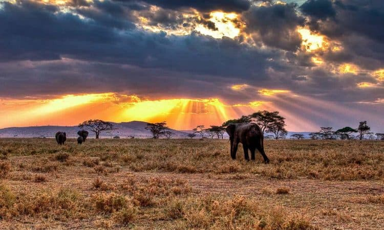 Natural Attraction in Tanzania, Serengeti Plains