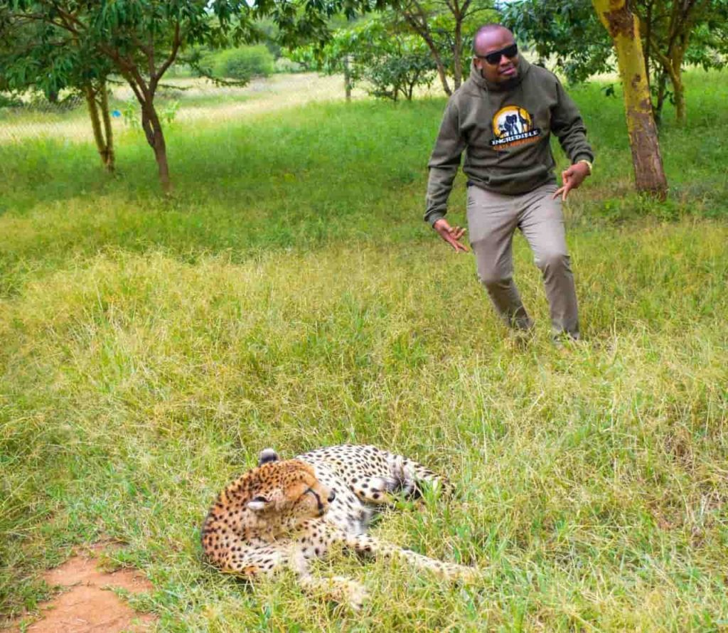 The open cheetah pen at Ol Jogi Wildlife Conservancy