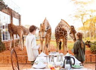 Giraffe Manor: Photo Travel photo bloggers