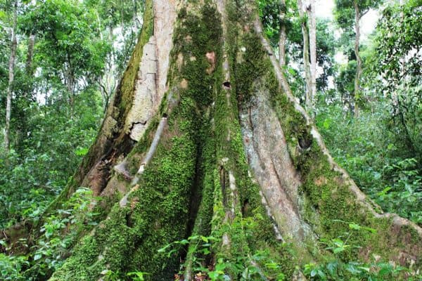 The Mabira Forest, (one of the hidden gems in Uganda)