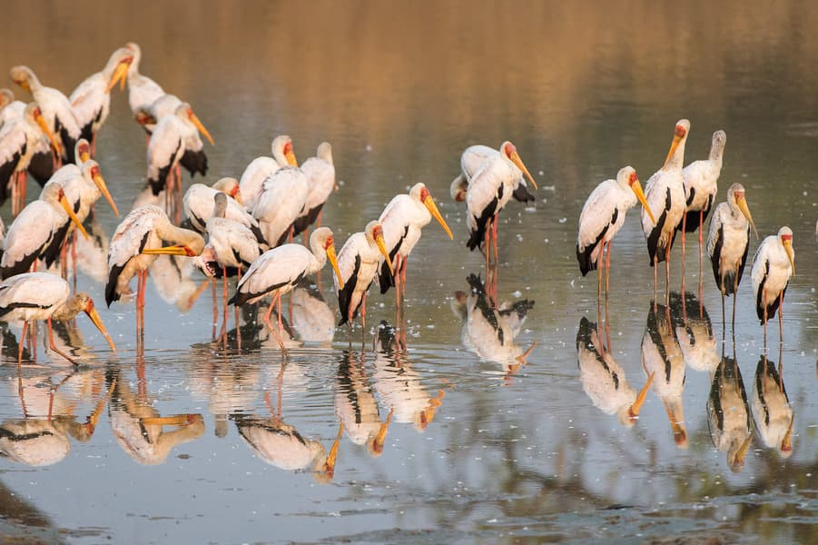 Migratory Birds, spotted during walking Safari ( Image: Robin Pope)