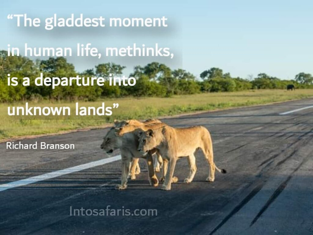 Gladdest moment (Best Travel quotes)