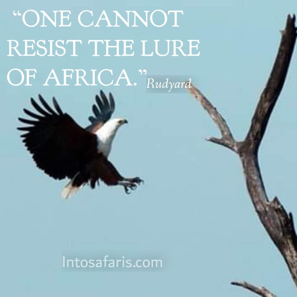 Lure of Africa (Best Travel quotes)
