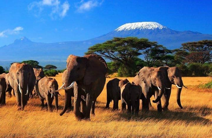 Herd of Elephants at Amboseli National Park