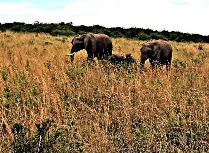 Elephants of Shompole Conservancy