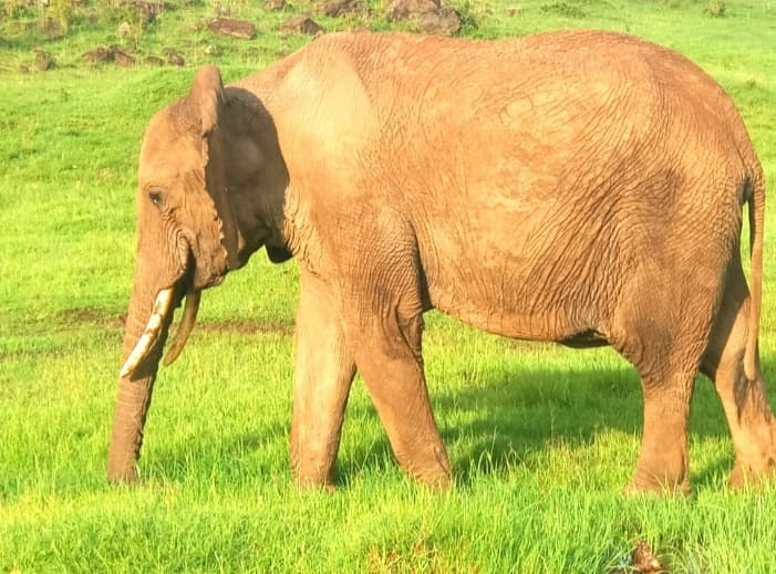 Facts about Elephants, The wringled Skin