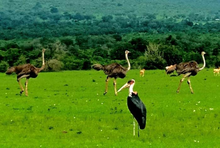 Birds of Samburu