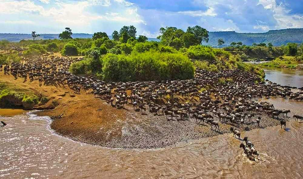 Wildbeest Migration in Masai Mara National Reserve