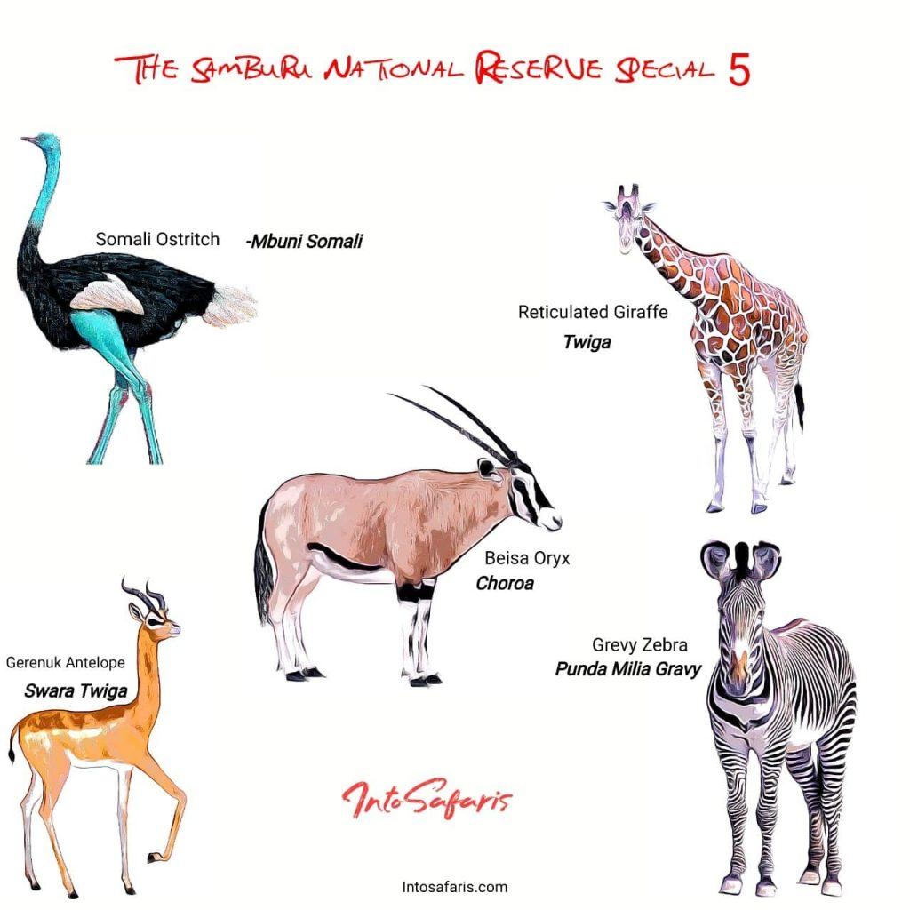 Special 5 Animals in swahili