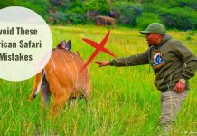 Mistakes to avoid on African Safari