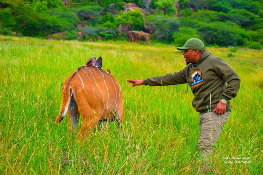 Ol Jogi wildlife Conservancy - Ideal for Budget weekend Getaway for couples.