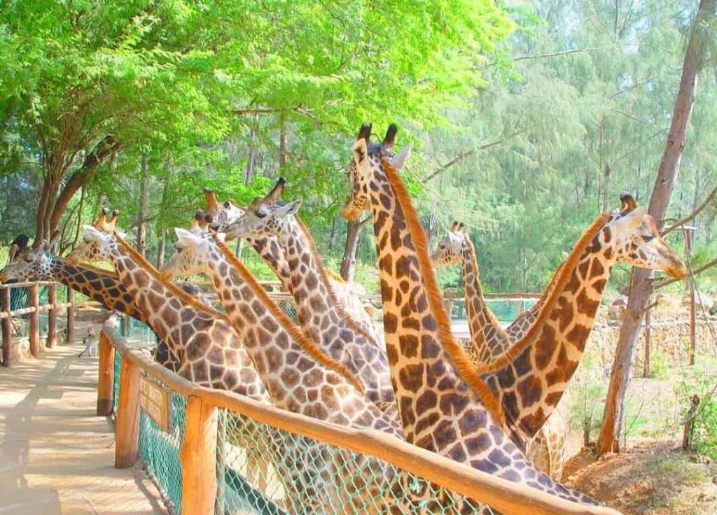One of the Main touristic attractin Mombasa - Haller Park