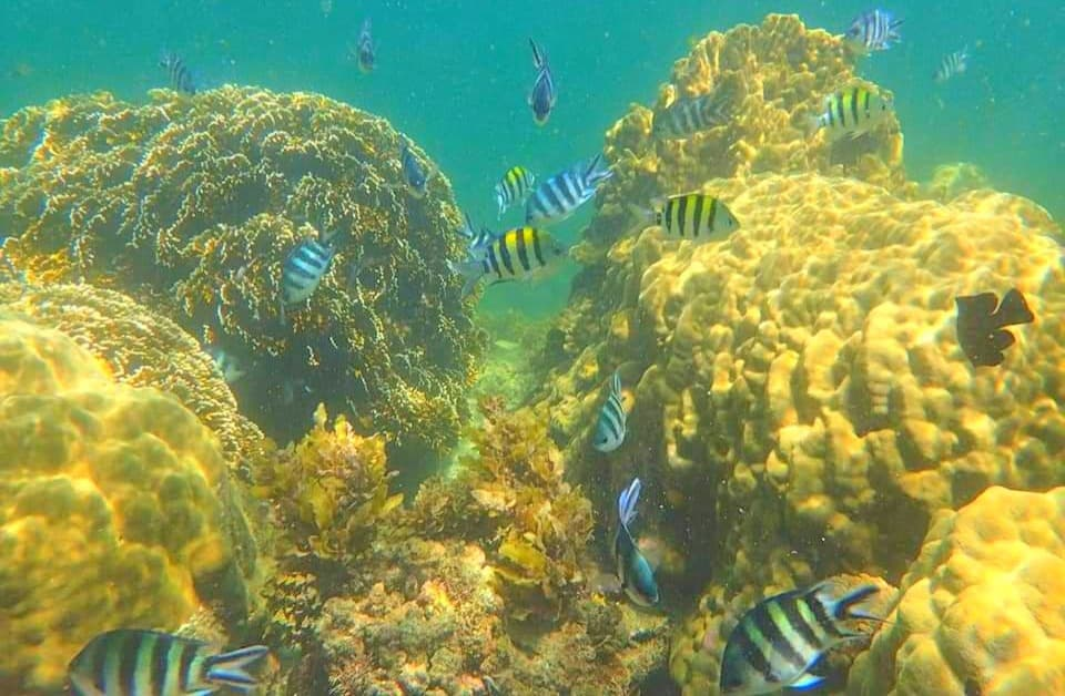 One of the main touristic attractions in Mombasa - Marine Park