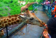 Touristic Attractions in Mombasa, Kenya.