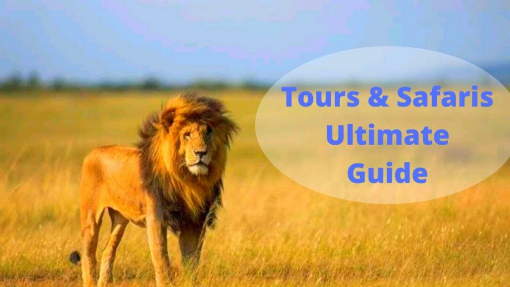 The Ultimate Tours and Safaris guide